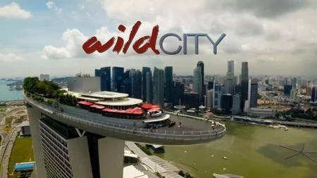 BSkyB - David Attenborough's: Wild City (2016)