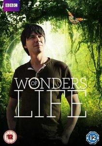 BBC: Wonders of Life. Season 1, Ep5 - Home / BBC: Чудеса жизни. Серия 5 - Дом (2013) [ReUp]