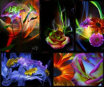 Hory Ma - The painting of lights - Flowers