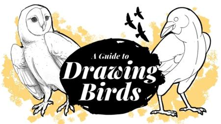 Feathered Friends Methods for Drawing Birds