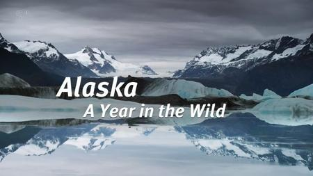 Channel 5 - Alaska: A Year in the Wild (2017)