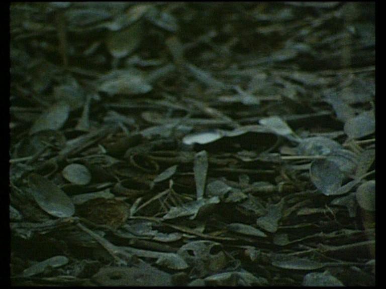 Shoah (1985) [The Masters of Cinema #38] [ReUp 2017]