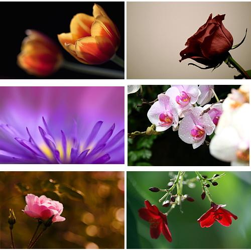 Wallpapers Flowers. Set 9