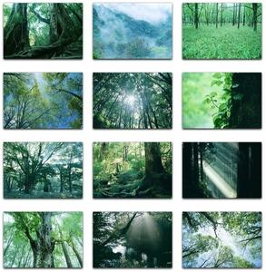 Datacraft Sozaijiten Vol. 134 Forests & Light Falling Through Trees