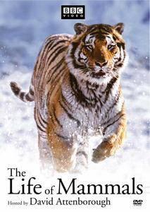 The Life of Mammals / BBC. Жизнь млекопитающих (2002)