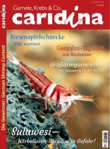 Caridina - Nr.1 2020