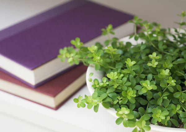 Datacraft Sozaijiten Vol. 184 Interior Greenery and Herbs