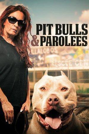 Pit Bulls and Parolees S11E04
